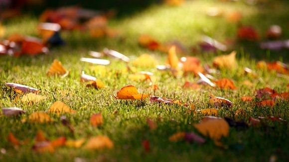 fall-grass