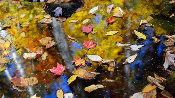 fall-leaves-floating