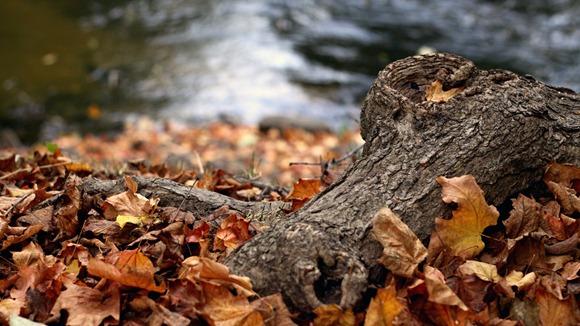 fall-log